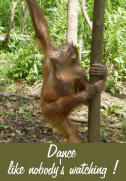 "Picture of Orangutan with caption ""Dance like nobody's watching"""