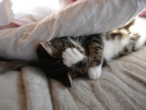 kitten_facepalm