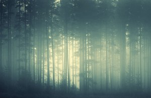 Mist through a forest