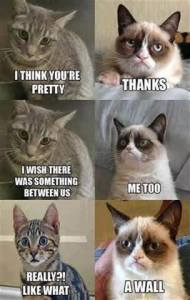 """Two cats conversing. """"I think you're pretty."""" """"Thanks."""" """"I wish there was something between us."""" """"Me too."""" """"Really?? Like what?"""" """"A wall."""""""